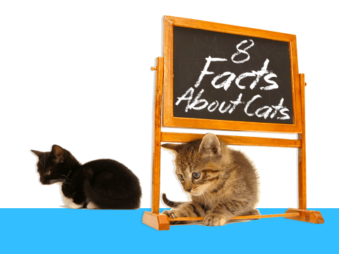 7 answers to things you've always wondered about cats