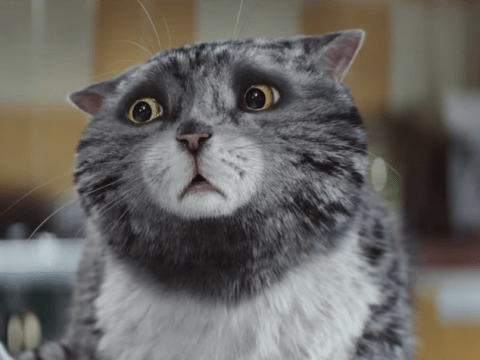 Sainsbury's Christmas advert star Mog the cat for blockbuster movie?