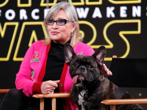 Carrie Fisher's dog Gary and his tongue are on Instagram now