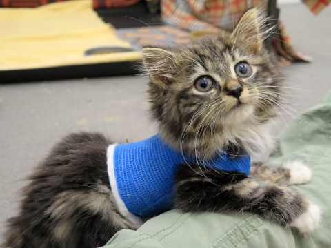 Tiny kitten has life-saving operation in time for Christmas