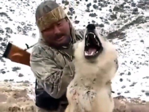 Hunter forces dying wolf to 'pose' for photo before strangling it