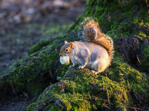 This squirrel eating a mini mince pie is our Christmas inspiration