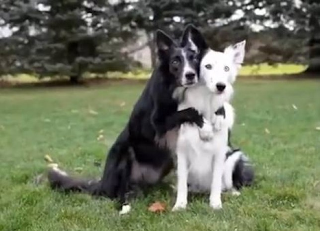 These two best friends posing for pictures are the epitome of squad goals.