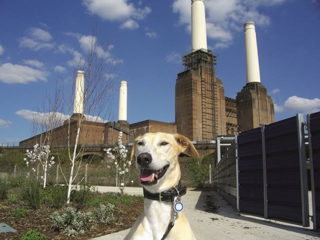17 things you never knew about Battersea dogs and cats home