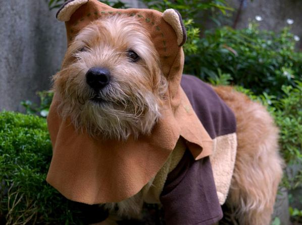 17 Cats And Dogs In Adorable Star Wars Costumes Metro News