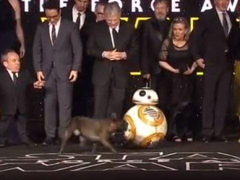 Carrie Fisher's dog Gary was at the Star Wars premiere but he only wanted to play with BB8