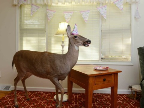 Meet Lilly: The orphaned deer who's pretty much a real-life Disney character