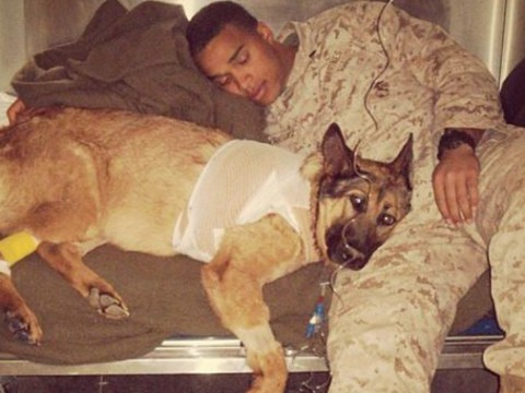 These photos prove how strong the bond is between soldiers and their dogs
