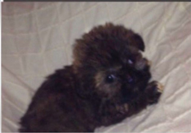 Hunt For Gumtree Seller Who Kept Severely Ill Puppy In Bad
