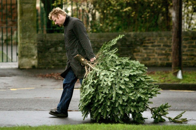 When Should You Take Down Christmas Tree.When To Take Down Your Christmas Tree In The New Year Not