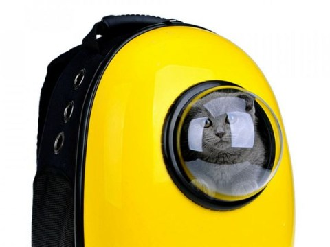 Here's the snazzy cat-carrying backpack that lets you keep your pet with you always
