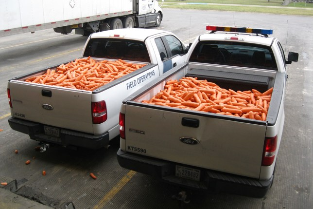 Drug smugglers tried to disguise $500,000 of weed as carrots | Metro