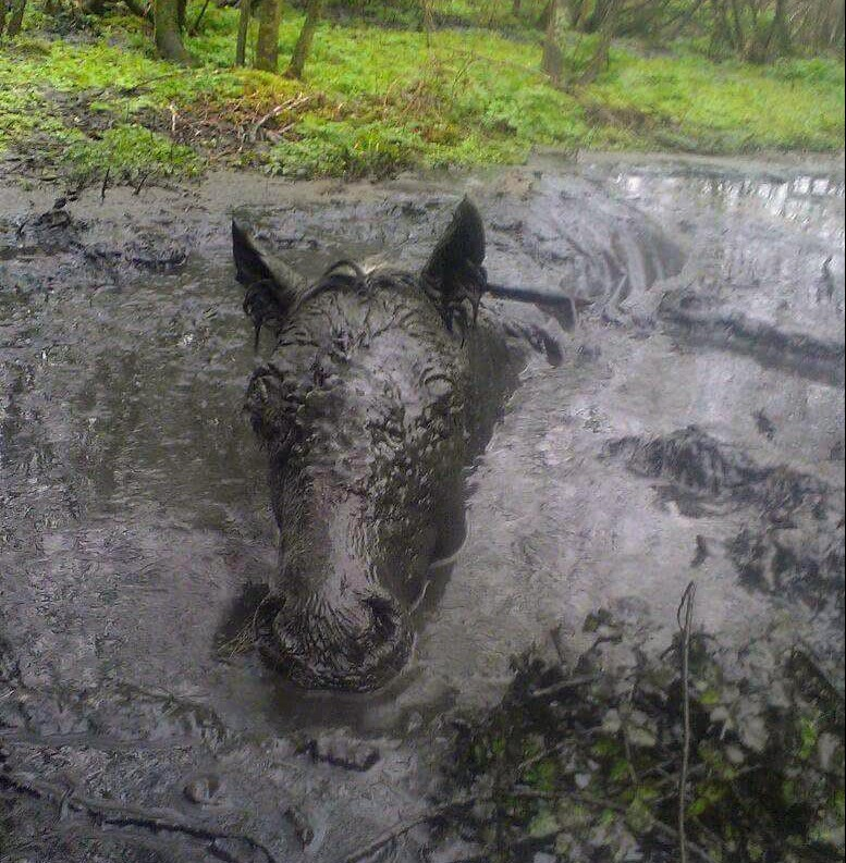 A pony was rescued from being submerged in a slurry pit 15 hours after escaping from its paddock and going missing. A PONY was rescued from being submerged in a slurry pit ¿ 15 hours after escaping from its paddock.nNikki Wilcox¿s six-year-old pony Prince was not found until the afternoon after he went missing.nHe was discovered neck-deep in the pit after an extensive search.n¿We went to the neighbouring farms and launched a search for him but really struggled to find him. Everyone at the farm helped us search,¿ said Nikki, from Pentyrch near Cardiff.n¿We found him in a slurry pit and called the vet straight away and started to try to rescue him.n¿It was horrendous.¿nnNikki WilcoxÕs six-year-old pony, Prince was not found until the afternoon after he went missing.nnHe was discovered neck deep from the pit after an extensive search.nnÒWe went to the neighbouring farms and launched a search for him but really struggled to find him. Everyone at the farm helped us search,Ó Nikki, from Pentyrch in Cardiff , said.nnÒWe found him in a slurry pit and called the vet straight away and started to try to rescue him.