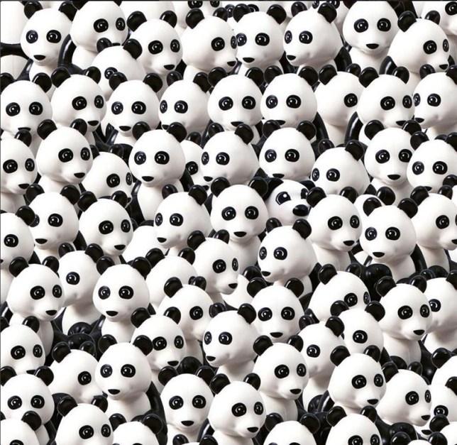 Spot the dog hidden amongst the pandas