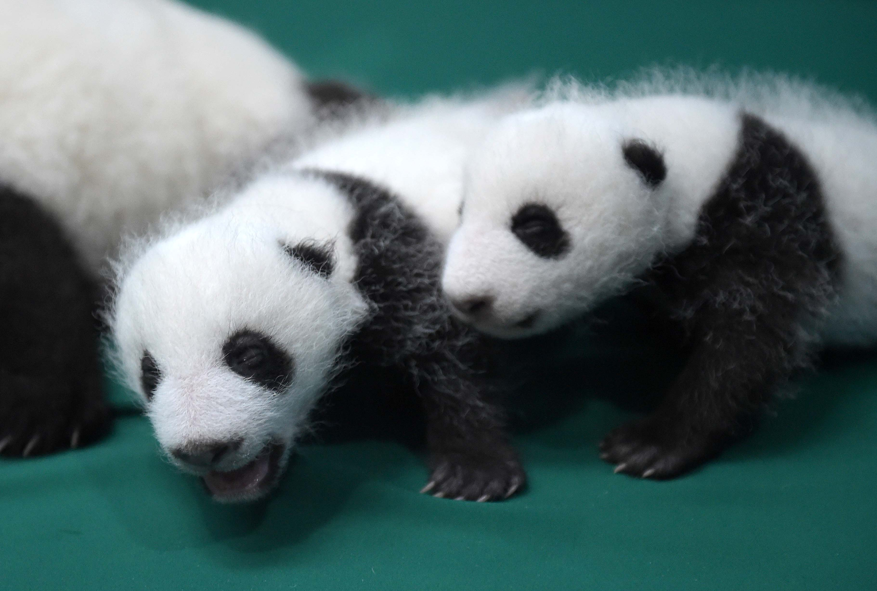 Here's your chance to name a baby panda