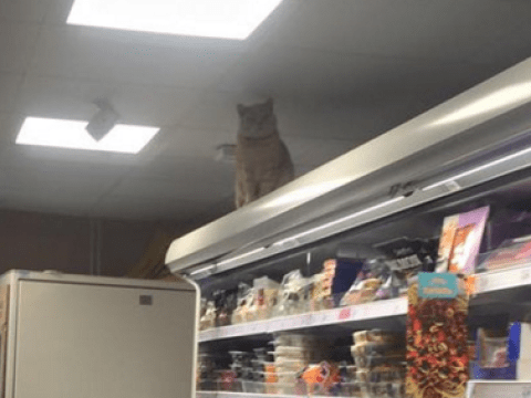 The Sainsbury's Cat is back and he's watching over you