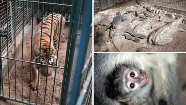 Animals are dying in Gaza's zoos