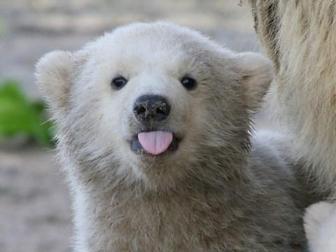 20 adorable and awe-inspiring reasons to celebrate International Polar Bear Day