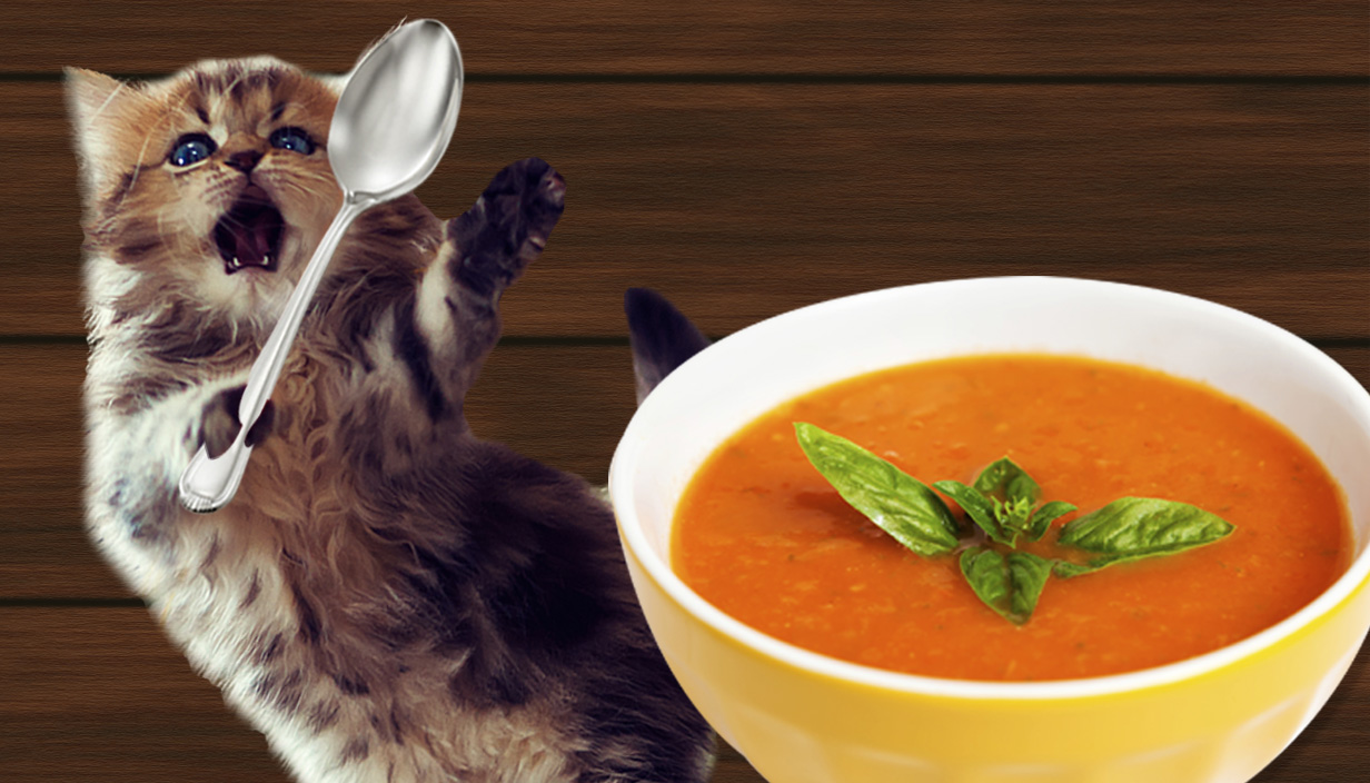Soup for cats is a thing now
