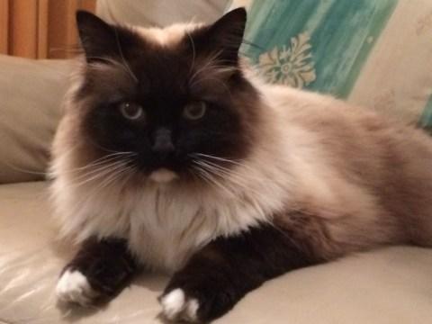 Serial cat killer 'behind spate of gruesome cat deaths'