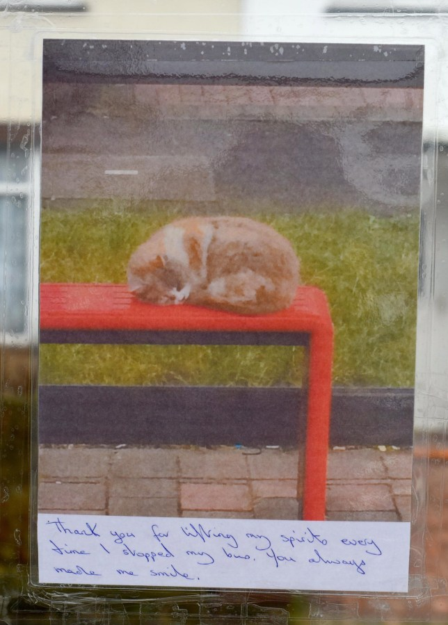 Pictured: A picture of the 'Bus Stop Cat' left with a message. A pet known as the 'Bus Stop Cat' has been put down after suffering a fractured skull and broken jaw following a vile attack. Hundreds of poignant messages have flooded in following the death of Missy, who spent most of her time greeting passengers as they got on a bus. Now a Just Giving page has been set up in order to buy a plaque dedicated to Missy which can be placed at the bus stop in Dunsbury Way, Havant, Hants. It has raised almost £1,000 in less than 24 hours, smashing the initial target of £500. SEE OUR COPY FOR DETAILS. © Solent News & Photo Agency UK +44 (0) 2380 458800