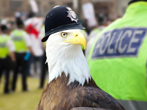 Officers want to use special Police Eagles to take down drones mid-air