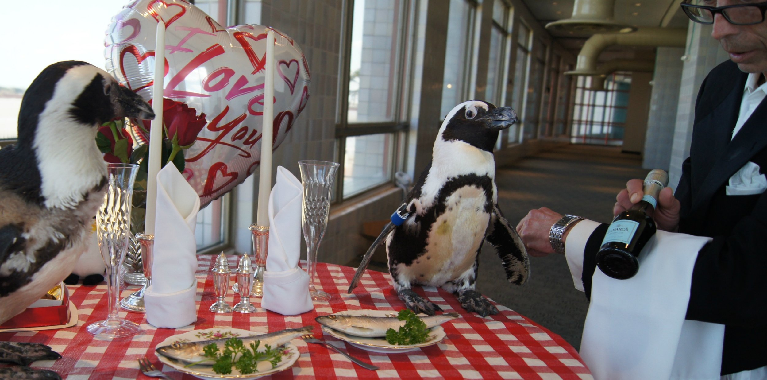This adorable penguin couple just celebrated their 22nd year together