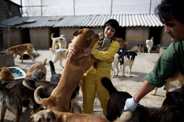 Dogs cling on Iranian volunteers, Mahtab Vakili (L) and Reza Moghaddam (R) as they check on them at Vafa animal shelter on February 19, 2016 in the town of Hashtgerd, some 70kms (43 miles) west of the capital Tehran. Vafa, the first animal shelter in Iran, is a non-government charity that relies on private donations and volunteers and it is currently providing shelter to more than 700 injured and homeless dogs. / AFP / BEHROUZ MEHRIBEHROUZ MEHRI/AFP/Getty Images