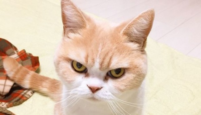 Image result for angry cat""