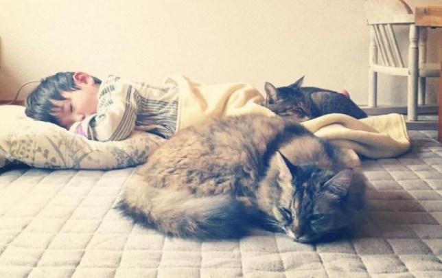little boy takes the cutest cat naps