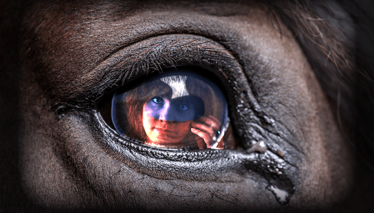 Horses can recognise human emotion, new study shows Source: Getty Images Credit: Myles Goode