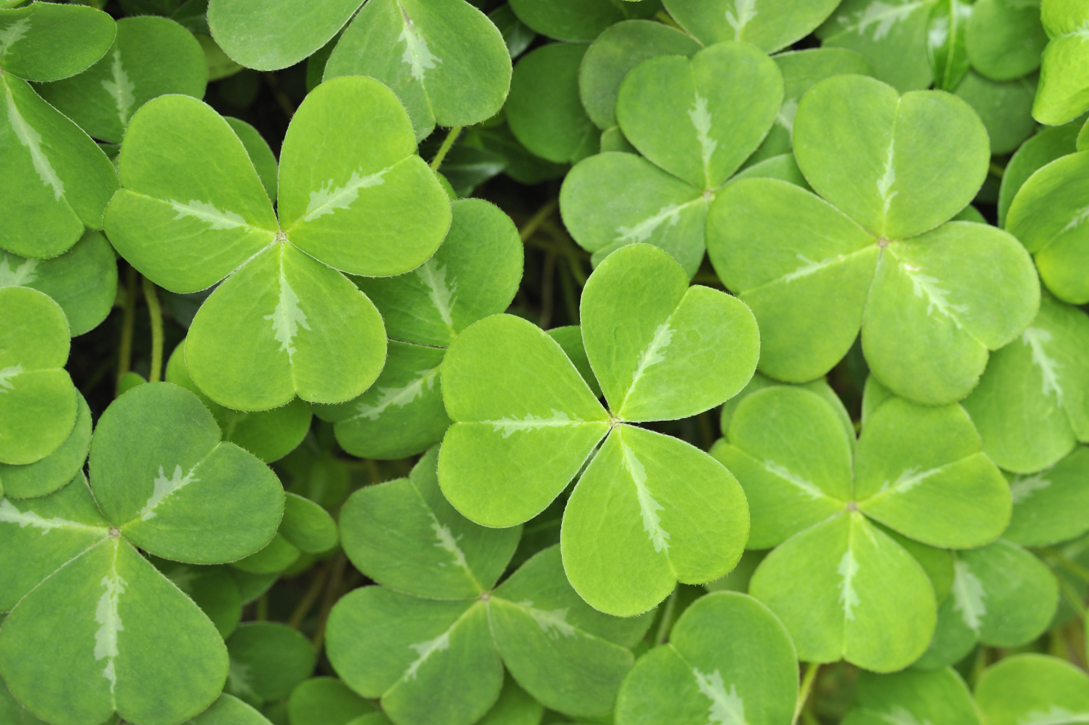 When is St Patrick's Day 2016? Who was Saint Patrick and why do we celebrate him?