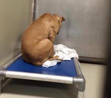 Pictures: Dawn Timmeney/FOX 29 Sad Dog