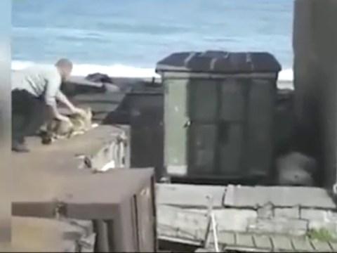Man throws dog at polar bear to stop it attacking woman