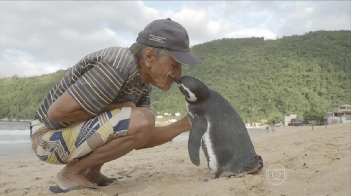 Joao Pereira de Souza and penguin TV Globo