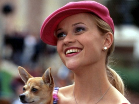 There is some very exciting news about a third Legally Blonde film