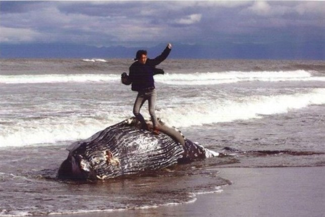 Winning entry in Japanese photo competition shows man standing on a beached whale Man Standing on a whale Credit: ABC