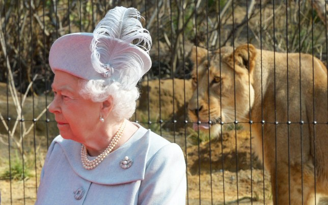 Queen Elizabeth II at London Zoo to mark the launch of a new lion enclosure. PRESS ASSOCIATION Photo. Picture date: Thursday March 17, 2016. The enclosure will form a new breeding centre, and ZSL will work with zoos across the globe to ensure a healthy population continues. See PA story ROYAL Zoo. Photo credit should read: Anthony Devlin/PA Wire
