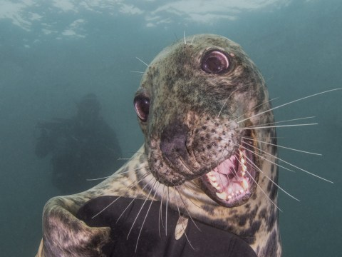 British photographer emerges victorious in underwater photography awards