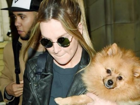 What on Earth has Perrie Edwards done to her dog?