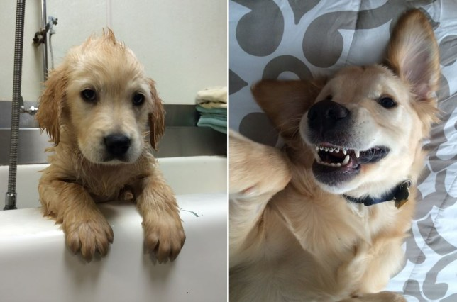 Puppy facebook