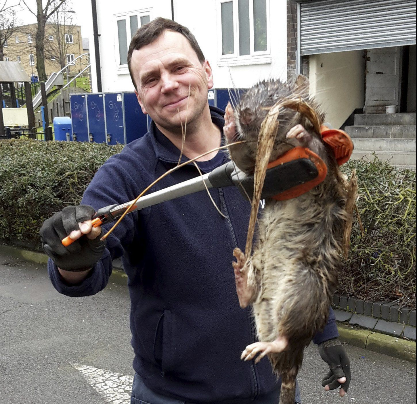 Was the '4ft monster rat' just a trick of perspective?