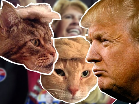 #TrumpYourCat: These animals bear an uncanny resemblance to Donald Trump