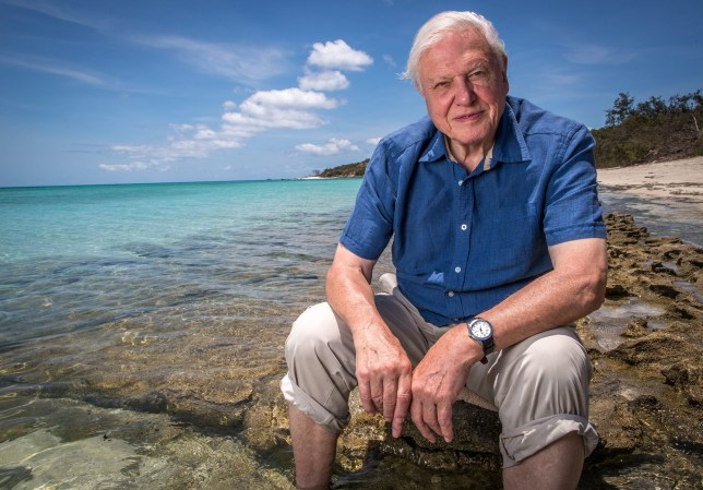 epa05247310 An undated handout picture made available by the Australian Broadcasting Corporation (ABC) on 07 April 2016 shows nature documentary maker Sir David Attenborough on the Great Barrier Reef, Queensland, Australia, during works for his upcoming three-part series on the famous coral reef on ABC TV. Attenborough blamed 'the twin perils brought by climate change, an increase in the temperature of the ocean and in its acidity' for threatening the reef's existence. EPA/AUSTRALIAN BROADCASTING CORPORATION/ABC/HANDOUT AUSTRALIA AND NEW ZEALAND OUT HANDOUT EDITORIAL USE ONLY/NO SALES