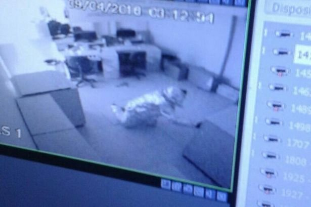 Thieves dress in tin foil in bid to fool alarm system