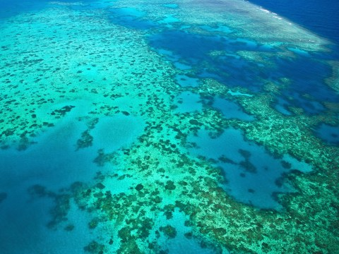 Great Barrier Reef could be killed off entirely within 40 years