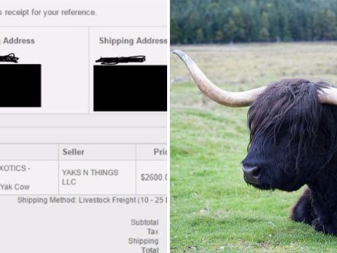 Man accidentally buys a cow off the internet while on sleeping  pills