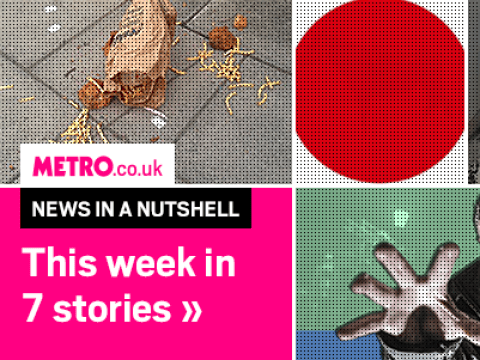 News in a Nutshell: How to be more attractive, cow-killing alligators and more