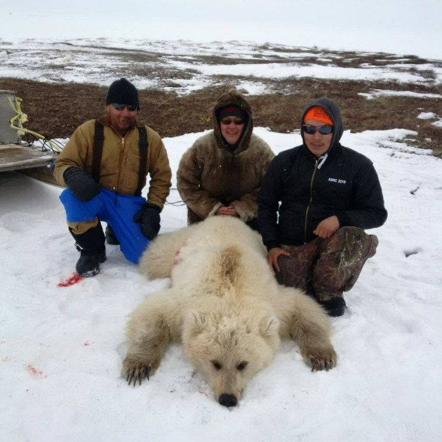 Pizzly or grolar bear: grizzly-polar hybrid is a cute result of climate change Picture: Facebook