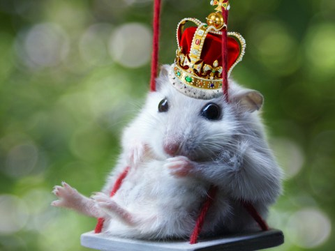 Apparently, the Royals have a pet hamster called Marvin